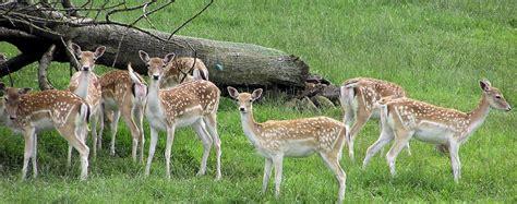Kuldiha Forest Tourism, Orissa