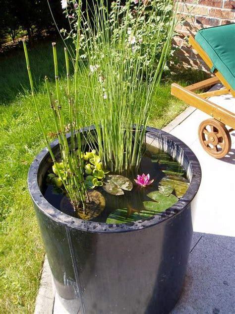 le mini jardin aquatique con 231 u dans un bac en zinc mini bassin et plantes d eau