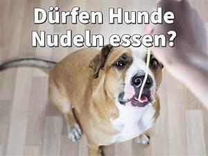 Nudeln Für Hunde : d rfen hunde nudeln essen rohe oder gekochte nudeln ungesunde reste ~ Watch28wear.com Haus und Dekorationen
