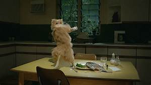 Dancing-Cat GIFs - Find & Share on GIPHY