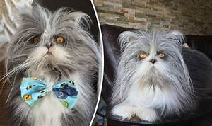 Mystery pet: Is it a cat or a dog? Viral pet confuses ...