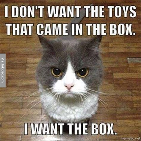 Meme Kitten - funny cat pictures meme
