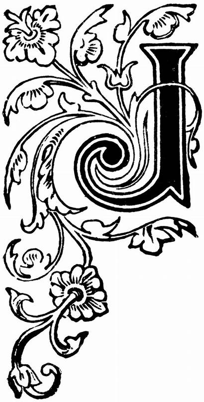 Letters Floral Letter Capital Calligraphy Illuminated Decorative