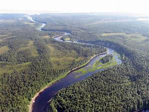 Life In The Taiga : wwf and mondi towards sustainable forestry in russia s boreal forest wwf ~ Frokenaadalensverden.com Haus und Dekorationen