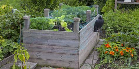 Chignons Im Garten Züchten hochbeet selber bauen und anlegen