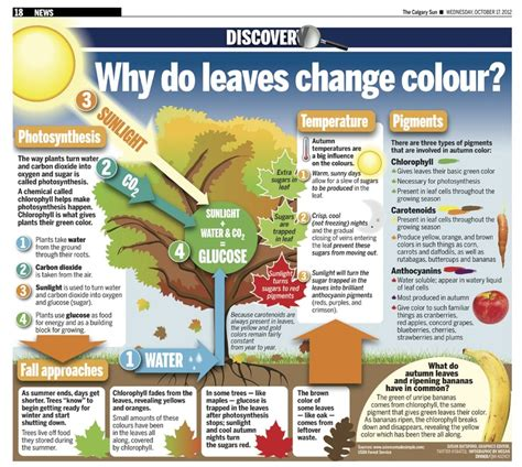 do change color 27 best images about fall facts on bright