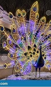 Amazing Illuminated Peacock At The Entrance To The Moscow ...