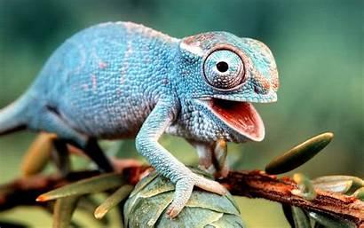 Wallpapers Animals Animal Nature