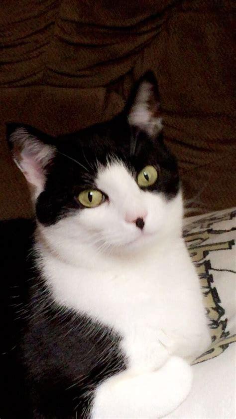 animals cat nosy tuxedo named cats