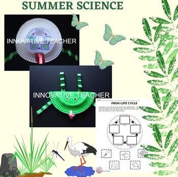 frog life cycle activity  craft  innovative teacher tpt