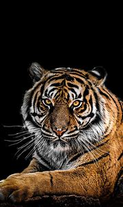 Beautiful👌 Image By: GEORGE DESIPRIS | Tiger pictures ...