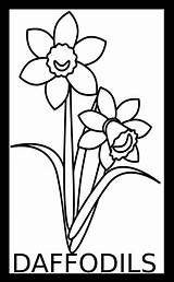 Daffodils Coloring Adult Line Bulbs Spring sketch template