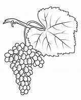 Grapes Coloring Pages Print Fiano Grape Printable Crafts Drawing sketch template