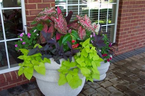 potted plants for shaded areas shade garden container