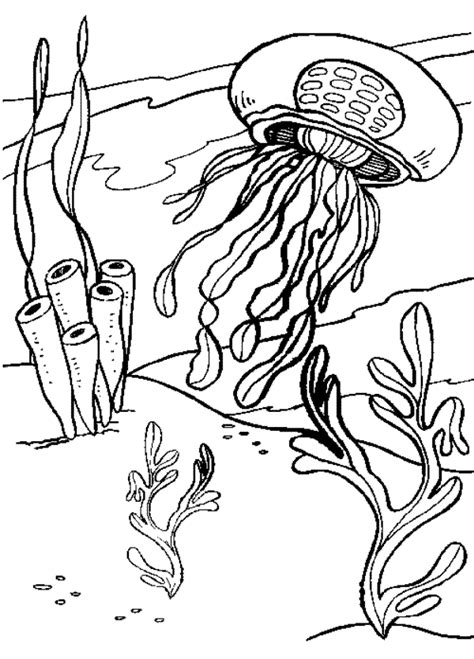 jellyfish coloring pages    print