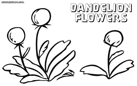 Dandelion Coloring Pages To Download And