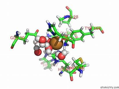 Copper Pdb Neutron Resting Crassa Monooxygenase Refinement