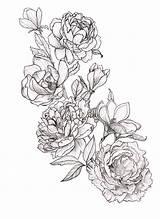 Peony Tattoo Coloring Drawing Peonies Tattoos Flower Magnolia Pfingstrosen Line Drawings Zeichnung Flowers Magnolias Tatouage Sleeve Blumen Sketch Geometric Tatouages sketch template