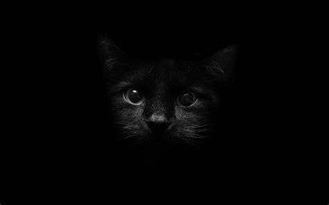 beautiful black cat cats wallpaper  fanpop