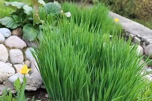Pflanzen Im Schatten : steingarten im schatten die sch nsten schattenvertr glichen pflanzen ~ Orissabook.com Haus und Dekorationen
