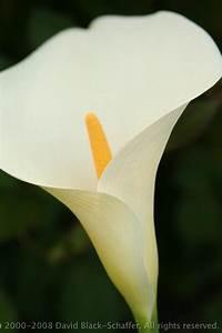 IMG_2624 beatufiul white flower pretty dark green ...