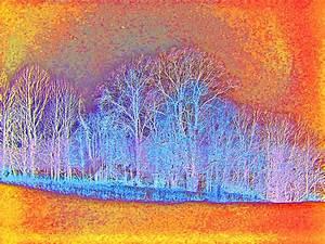 Abstract Tree Landscape 8x10 Modern Art Photography Print
