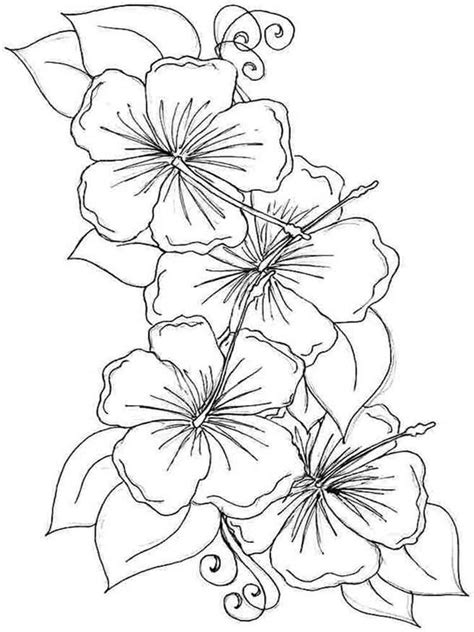 hibiscus flower coloring pages   print