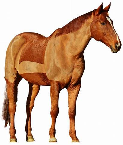 Horse Transparent Background Clipart Ride Jumping Racing
