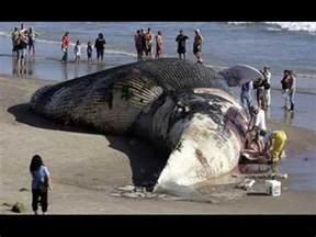 Largest World Biggest Animal
