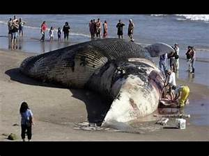 Biggest Animal In The World ~ Information News