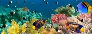 Welche Fische Passen Zusammen Aquarium : pesci tropicali acquario trovami ~ Lizthompson.info Haus und Dekorationen