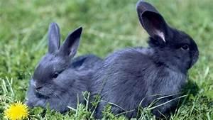 Wohnung Vermieten Was Muss Man Beachten : kaninchen kaufen was muss man beachten ~ Yasmunasinghe.com Haus und Dekorationen