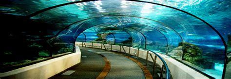 l aquarium de club laquarium de barcelona barcelona halaltrip