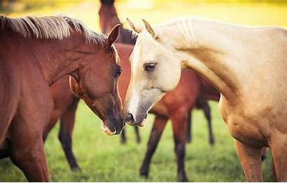 Horse Wallpapers Background