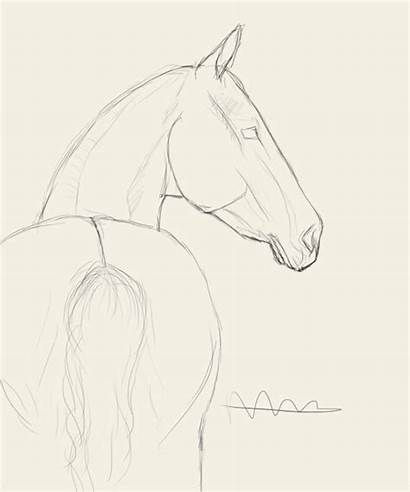 Horse Drawings Pencil Drawing Easy Head Animal