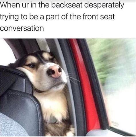 dog memes travel funny dog memes  sidewalk dog