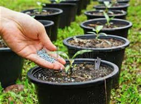 tips memupuk tanaman hias pot situsbungacom