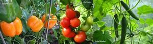 Gurken Und Tomaten Zusammen Im Gewächshaus : lila flieder garten gew chshaus ~ A.2002-acura-tl-radio.info Haus und Dekorationen