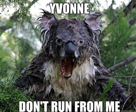 wet koala memes quickmeme