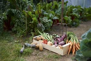 Quel Legume Planter En Septembre : les l gumes planter dans son potager ~ Melissatoandfro.com Idées de Décoration