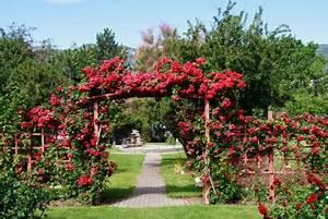 Rosen Für Rosenbogen : einen rosenbogen im garten anlegen so geht 39 s ~ Orissabook.com Haus und Dekorationen