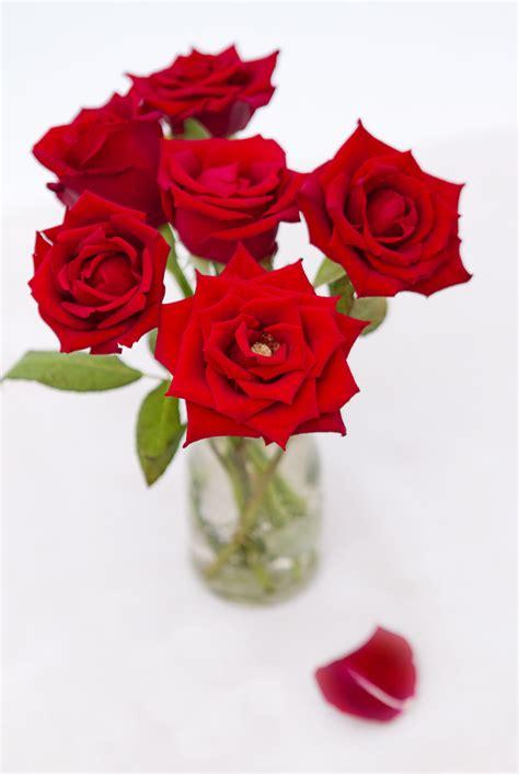 order flowers  easily mygiftsexpress