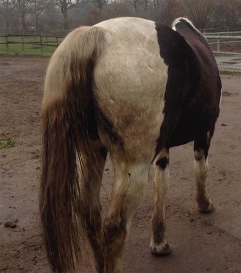 durchfall und kotwasser beim pferd jet kundenerfahrungen
