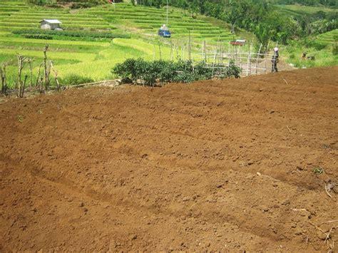 Cara budidaya jahe dilanjutkan dengan menyiapkan penyemaian bibit jahe. 5 Cara Menanam Jahe Merah Di Tanah yang Benar