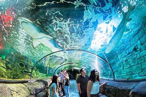 sea sydney aquarium letsgokids