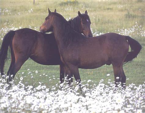 domestic horses animal equus caballus