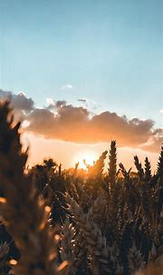 Sunrise Phone Wallpaper [1080x2340] - 066