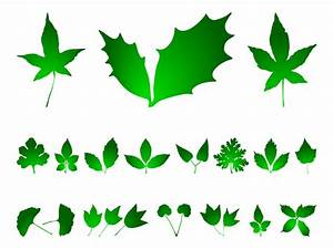 Leaf clipart mistletoe - Pencil and in color leaf clipart ...