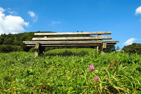picture grass meadow bench field nature