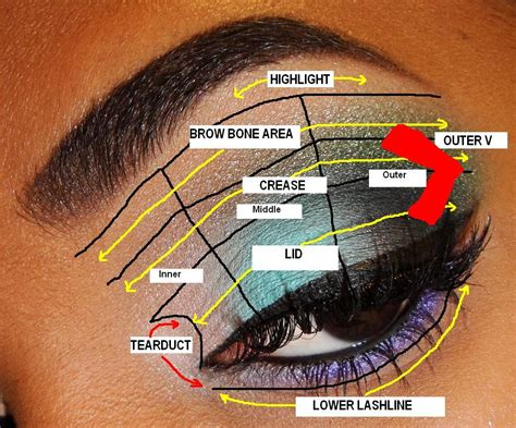 Diagram For Eye Makeup by The Fancy Tips For Beginners Eyeshadow Placement
